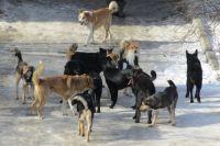 Опасный гуманизм. Нужно ли запретить охоту на диких собак?